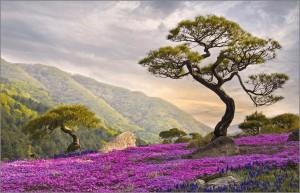 hilly landschap paarse bloemen